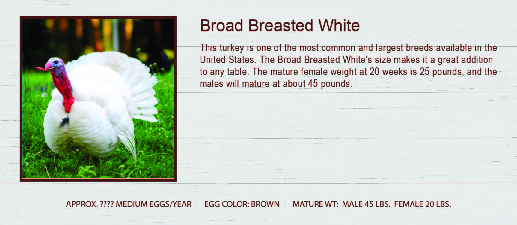 Broad Breasted White