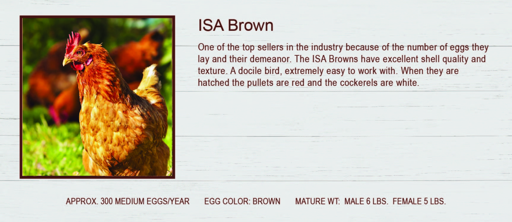 ISA Brown